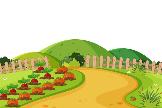 Landschaftshintergrund mit gemüse auf ackerland Premium Vektoren