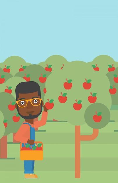Landwirt, der äpfel sammelt Premium Vektoren