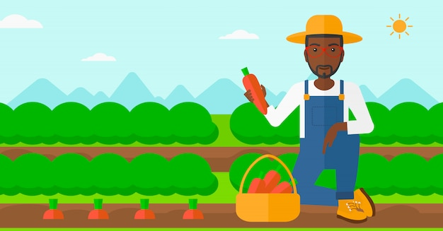 Landwirt, der karotten sammelt. Premium Vektoren