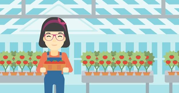 Landwirt, der tomaten sammelt Premium Vektoren