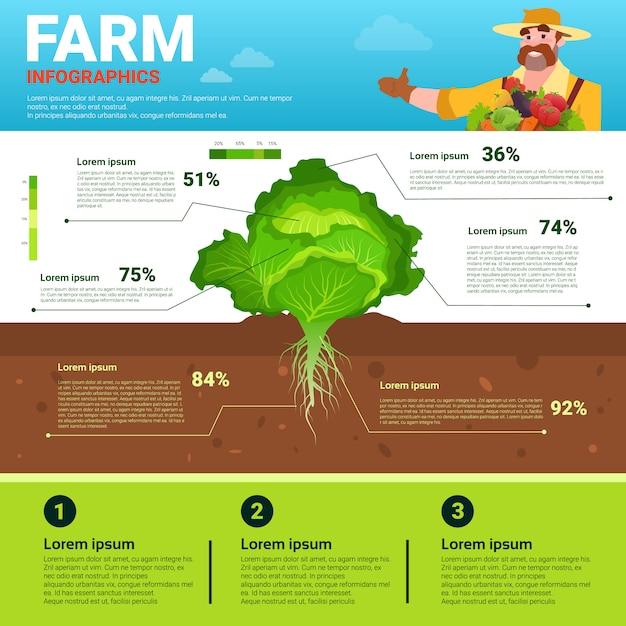 Landwirtschaft infographics eco freundliche organische natürliche pflanzliche wachstumsfarm-produktionsfahne Premium Vektoren