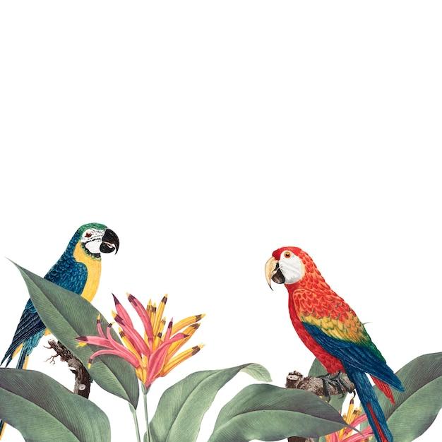 Laub-modellillustration des macaws tropische Kostenlosen Vektoren