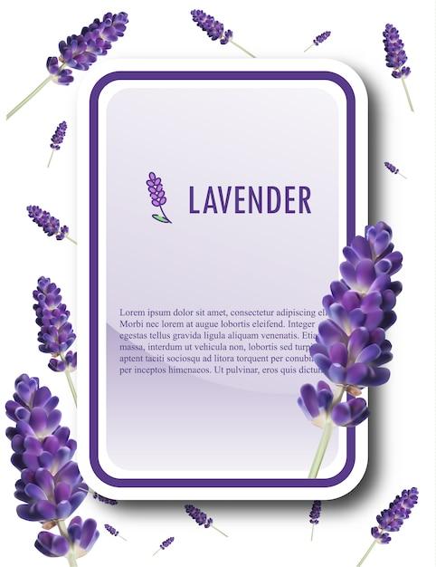 Lavendel banner vorlage. lavendel-vektor-illustration. Premium Vektoren