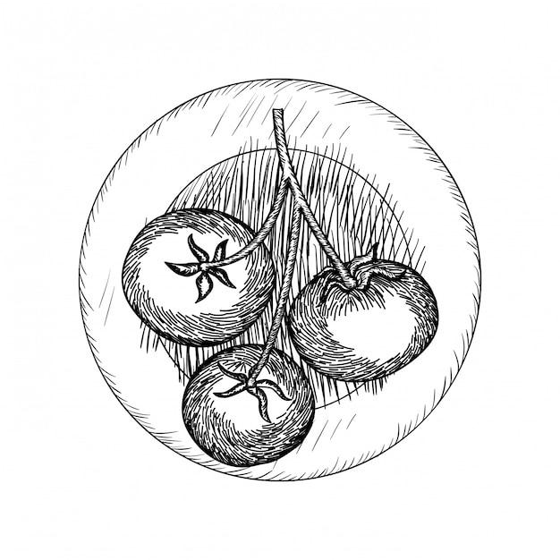 Leckere tomate in zeichnung isoliert symbol Premium Vektoren