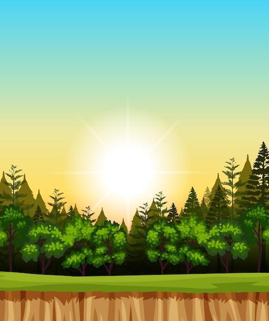 Leere sonnenaufgangshimmelillustrationsszene mit kiefern im wald Kostenlosen Vektoren