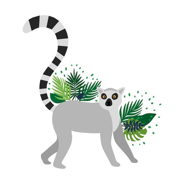 Lemur getrennt im weißen hintergrund Premium Vektoren