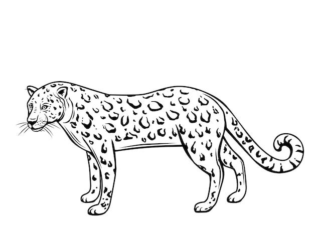 Leopard, umriss tier. panthera, puma oder wildkatze zeichnung illustration, isoliert. Premium Vektoren