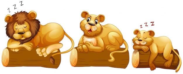 Lion familie auf dem baumstamm Kostenlosen Vektoren