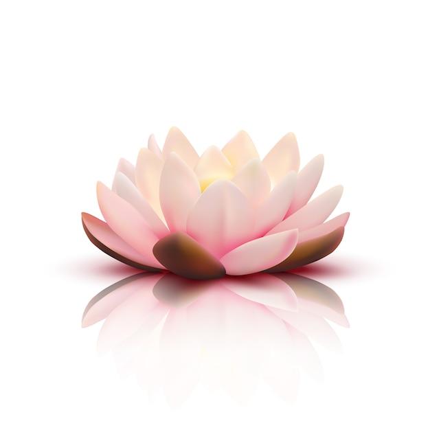 Lokalisierte blume des lotos mit den hellrosa blumenblättern mit reflexion auf weißer vektorillustration des hintergrundes 3d Kostenlosen Vektoren
