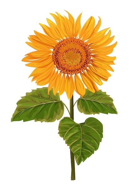 Lokalisierte illustration der sonnenblume Premium Vektoren