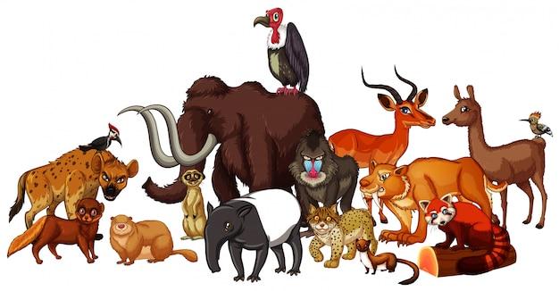 Lokalisiertes bild von wilden tieren Kostenlosen Vektoren