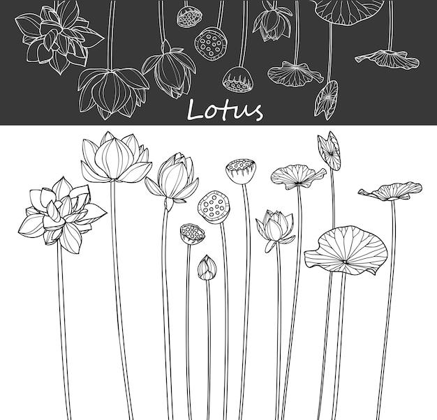 Lotus leaf und blumenzeichnungen. Premium Vektoren