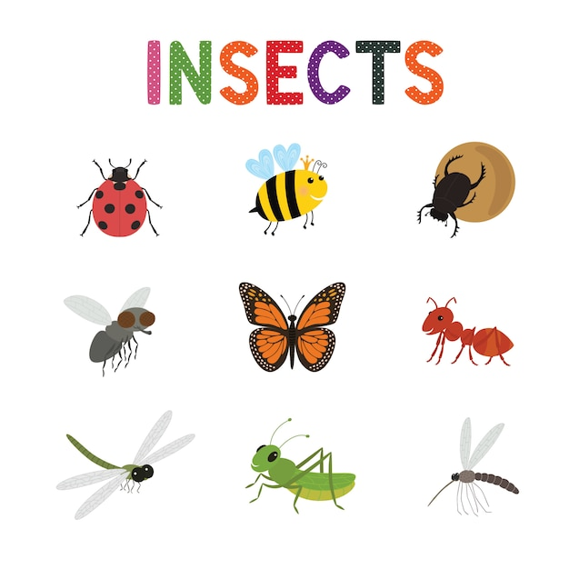 Lustige insekten Premium Vektoren