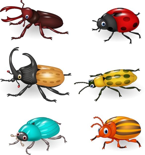Lustige käfersammlung der karikatur Premium Vektoren