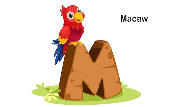 M für macaw Premium Vektoren