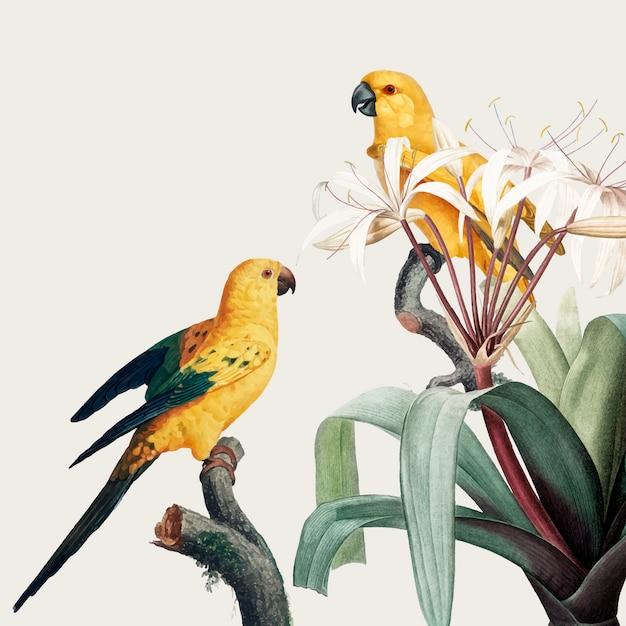 Macaw tropische abbildung Kostenlosen Vektoren