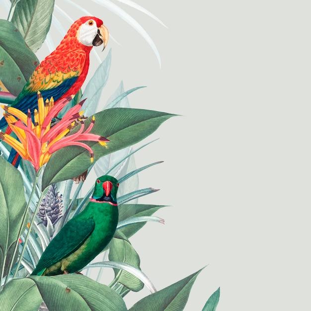 Macaw tropische modellillustration Kostenlosen Vektoren