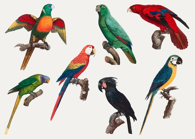 Macaws vintage-design Kostenlosen Vektoren