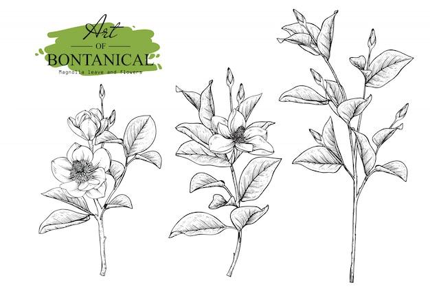 Magnolie blatt- und blumenzeichnungen Premium Vektoren
