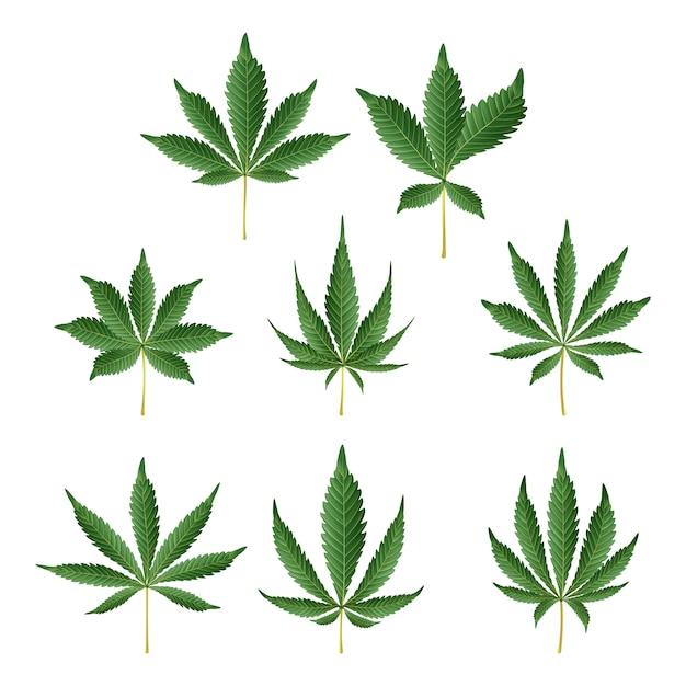 Marihuana-grünes blatt Premium Vektoren