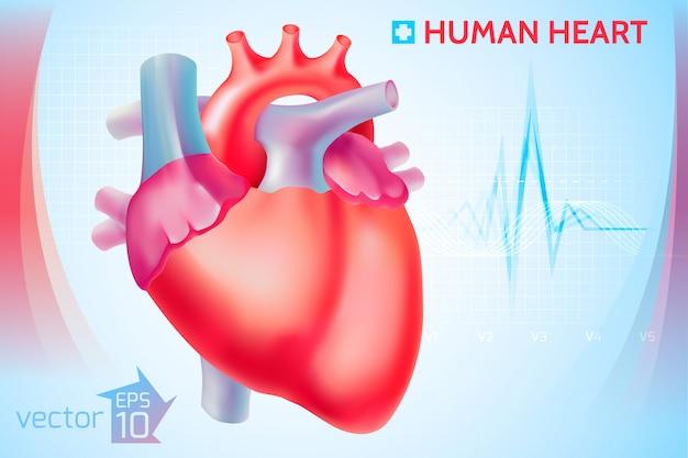 Medizinische anatomische cardio-schablone mit buntem menschlichem herzen auf hellblau Kostenlosen Vektoren