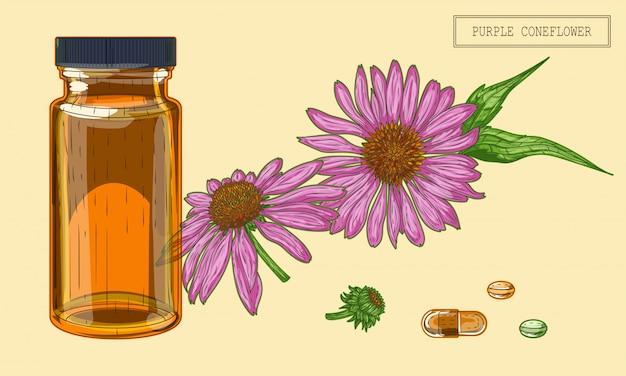 Medizinische echinacea blumen und flakon Premium Vektoren