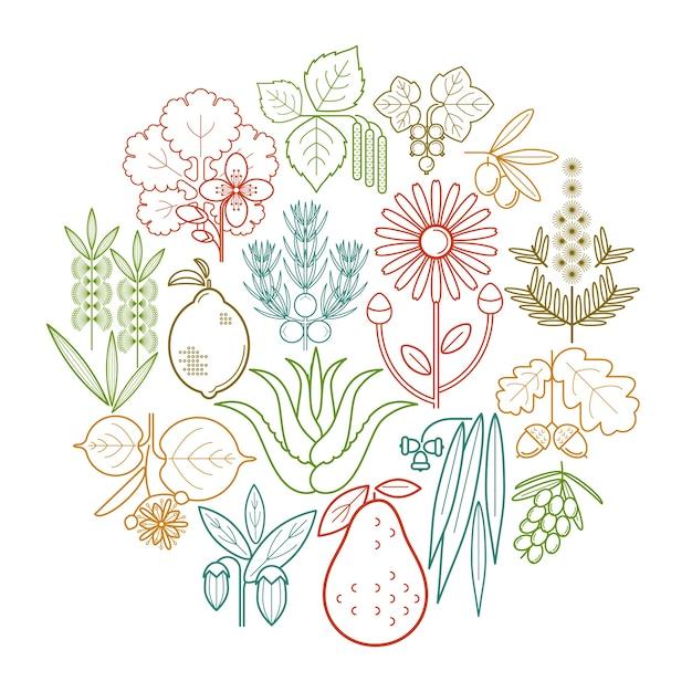 Medizinische farbkräuter im kreis setzen. johannisbeere, olive, wacholder, schöllkraut, salbei, avocado, arnika, akazie, limette, teebaum, eiche, sanddorn, eukalyptus, birke, zitrone, aloe, jojoba. Premium Vektoren