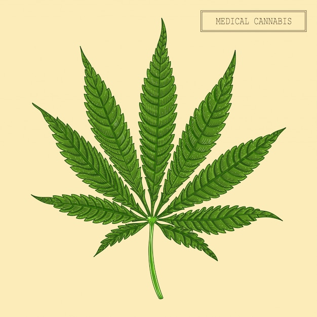Medizinisches cannabisblatt Premium Vektoren