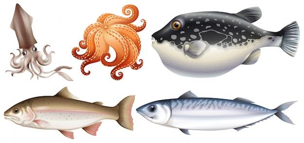 Meeresfrüchte Kostenlosen Vektoren