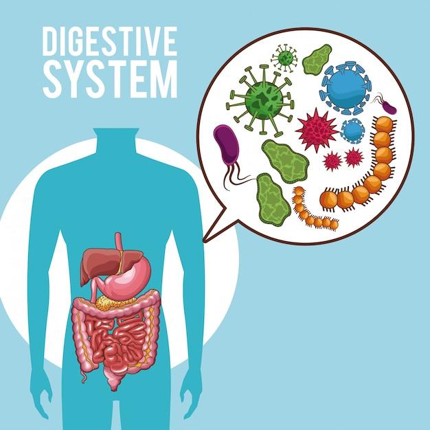 Menschliche Organe des Verdauungssystems | Download der Premium Vektor