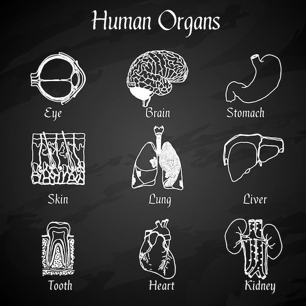Menschliche organe tafel icons Kostenlosen Vektoren