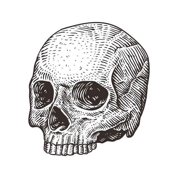 Menschliche Schädel Illustration | Download der Premium Vektor