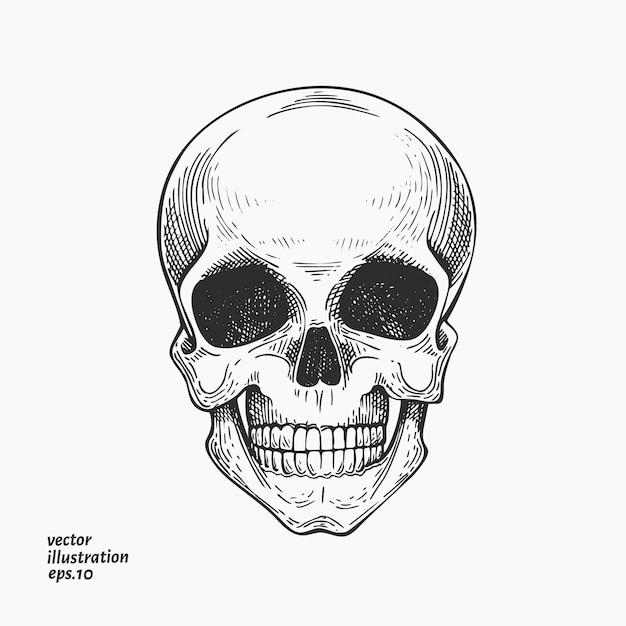 Menschlicher schädel illustration. hand gezeichnete skelettillustration. Premium Vektoren