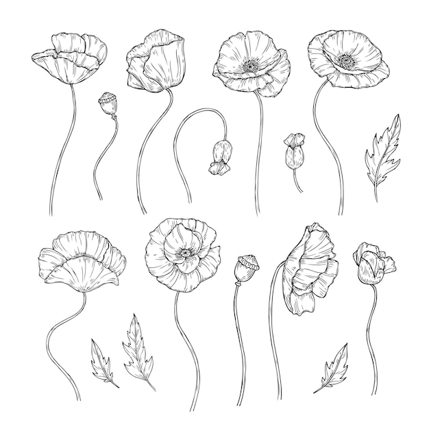 Mohn Skizze Mohn Ornament Dekor Wandkunst Dekorative Pflanze Mohn Blume Knospe Pflanzen Tapete Schone Tatowierung Premium Vektor