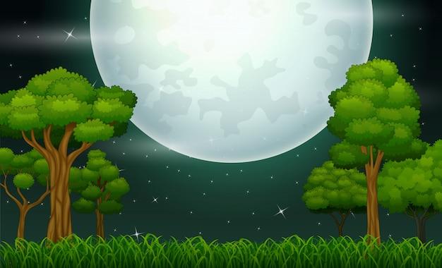 Nachtzeitwaldlandschaft mit einem vollmond Premium Vektoren