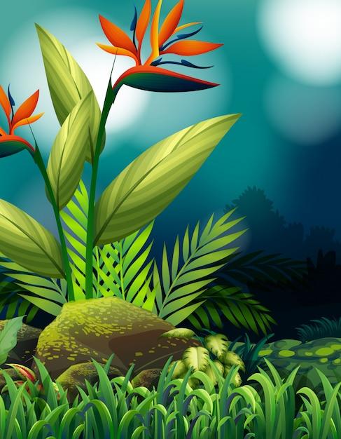 Naturszene mit paradiesvogel im garten Kostenlosen Vektoren