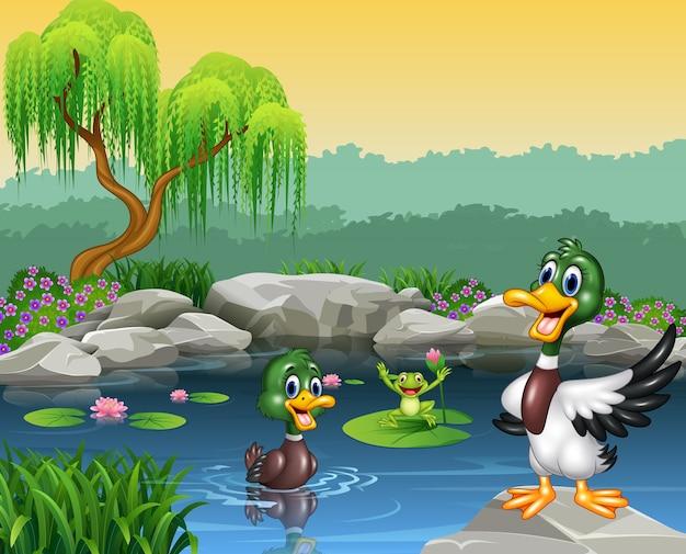 Nette enten, die auf dem teich und dem frosch schwimmen Premium Vektoren