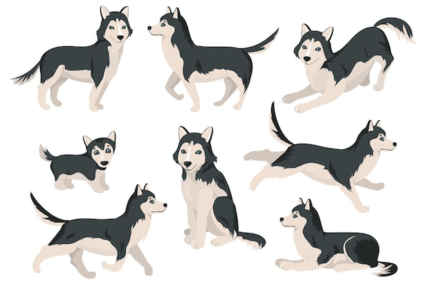 Netter husky-hund in verschiedenen posen flach eingestellt Kostenlosen Vektoren
