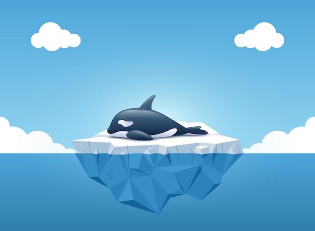Netter schwertwal, der auf dem eisberg schläft Premium Vektoren