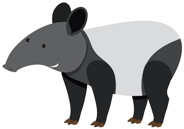 Netter tapir, der auf weißem hintergrund steht Premium Vektoren
