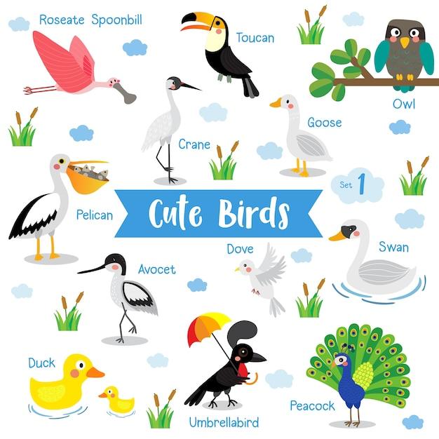 Netter vogel tierkarikatur mit tiernamen Premium Vektoren