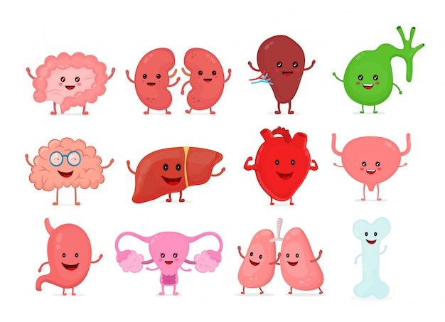 Nettes lächelndes glückliches menschliches gesundes starkes organ gesetzt. Premium Vektoren