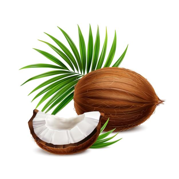 Neues ganzes und segment der kokosnuss mit realistischer zusammensetzung der weißen fleischnahaufnahme mit palmwedel verlässt illustration Kostenlosen Vektoren
