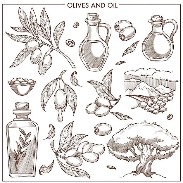 Oliven auf zweigen und öl Premium Vektoren