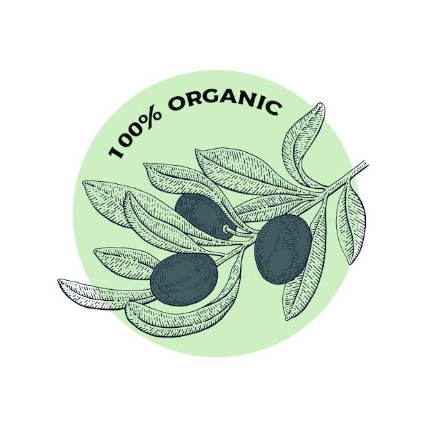 Olivenbaum. vintage logo-konzept. gezeichnete illustration des botanikvektors hand lokalisiert auf weißem hintergrund. skizzenstil. Premium Vektoren