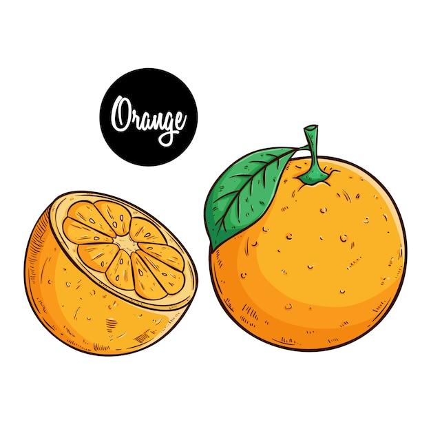 Orange fruchtillustration mit farbiger skizzenart Premium Vektoren