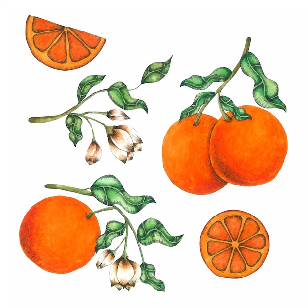 Orange handgemalt in der aquarellansammlung Premium Vektoren