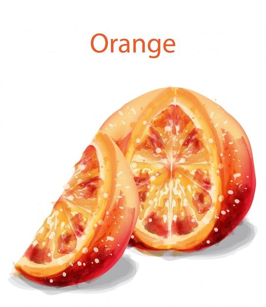 Orange scheibenfrüchte im aquarell Premium Vektoren
