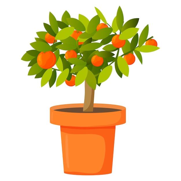 Orangenbaum in einem topf Premium Vektoren