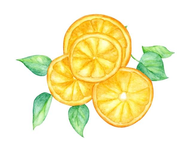 Orangenfruchtscheibe und grüne blätter Premium Vektoren